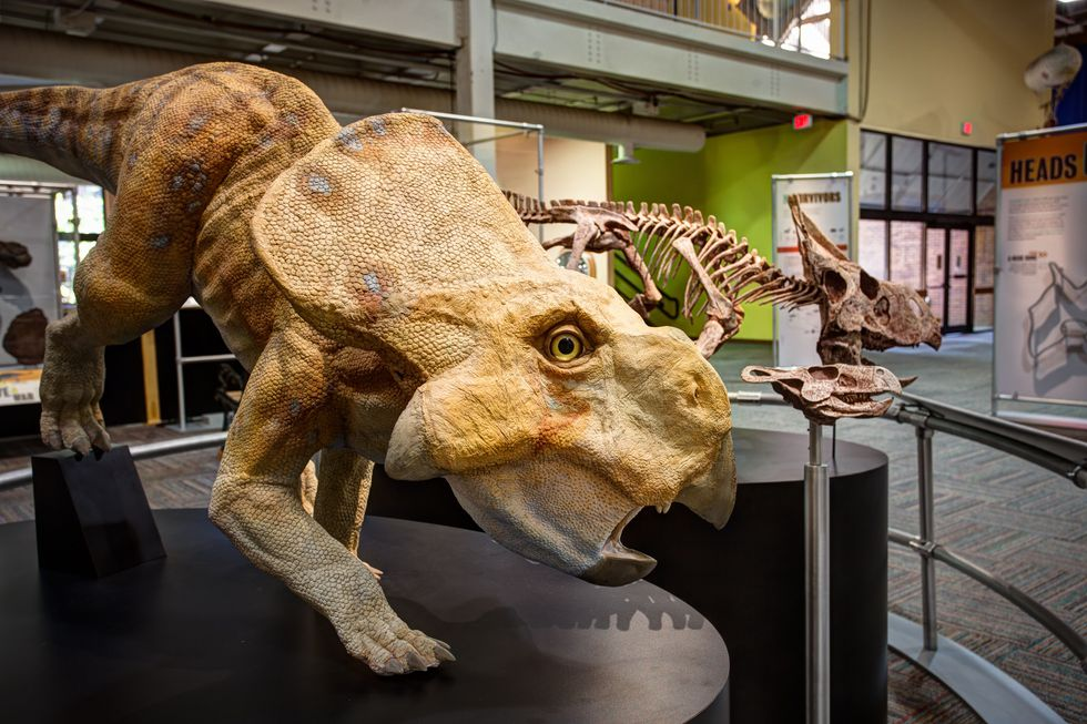 PPHM to open new large-scale dinosaur exhibit.