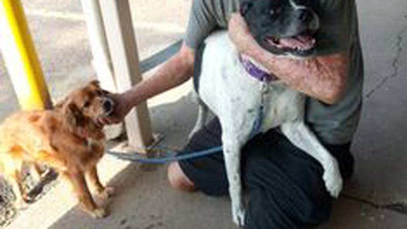 amarillo woman helps homeless and dogs
