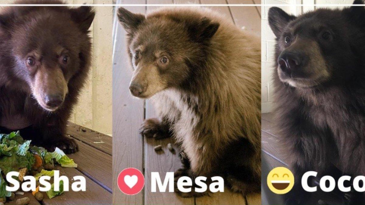 Amarillo Zoo new bear cub name options (Source: City of Amarillo)