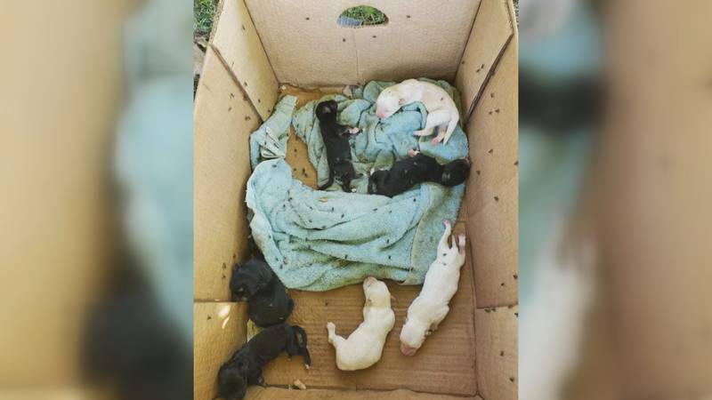 Several Amarillo animal shelters are working together to rescue almost 40 dogs from a massive...