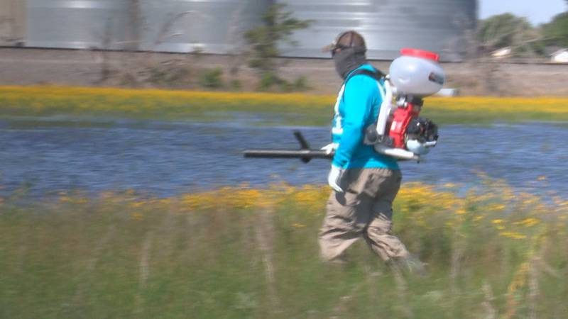 Entomologists predict Amarillo will see the worst mosquito season in years, city preparing.