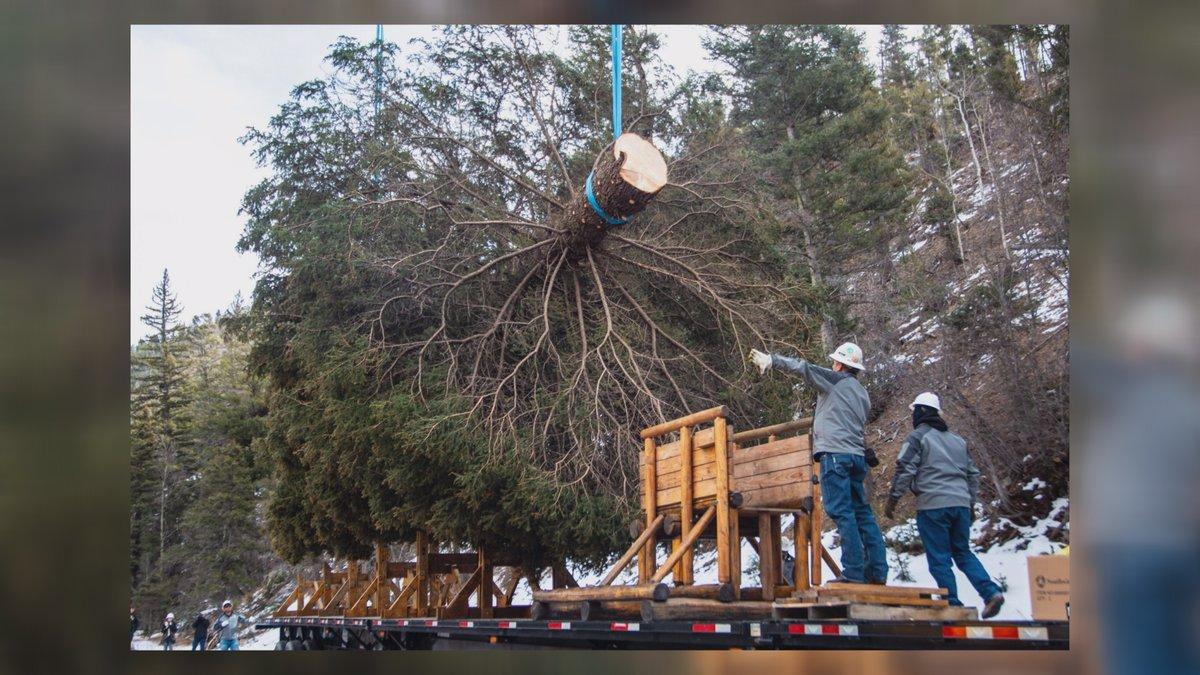 (Source: U.S. Capitol Christmas Tree Facebook)