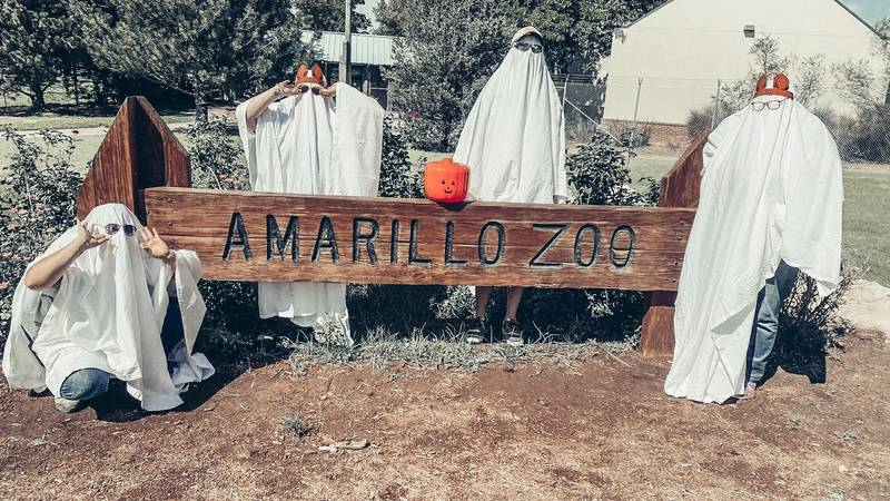 Amarillo Zoo is looking for volunteers to help hand out candy, dress up or help with guest...